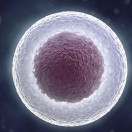 celulas-madre